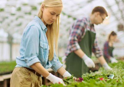 Aide-horticulteurs dans une serre.